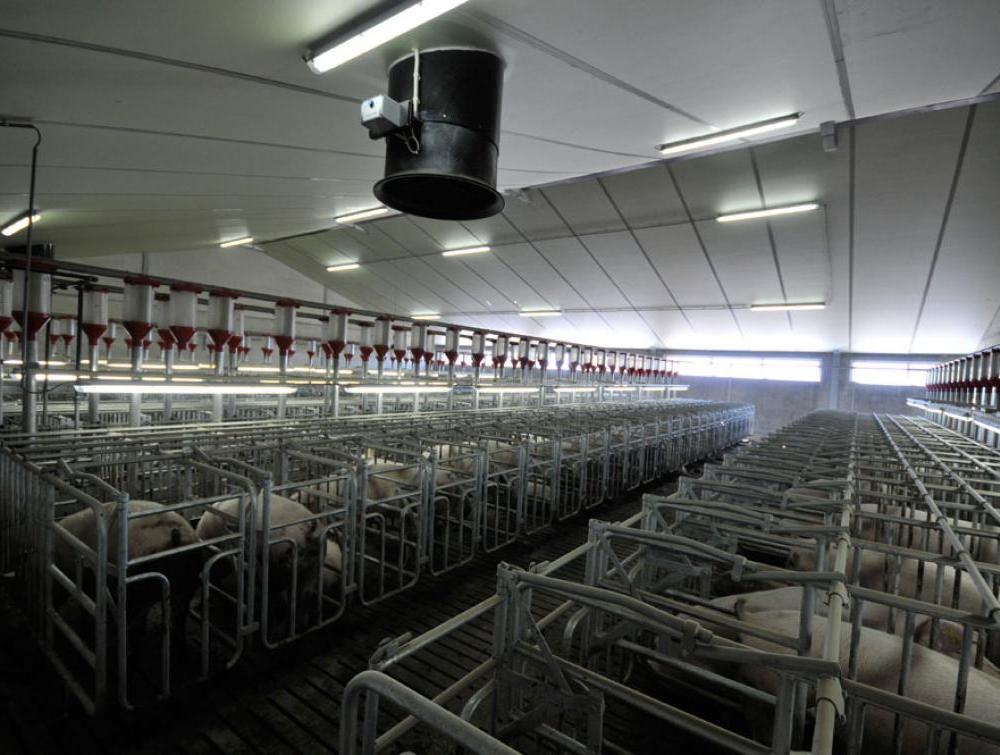 Eurothane AL agrarische isolatieplaat in veestal