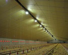 Eurothane AL agrarische isolatieplaat in pluimvee stal