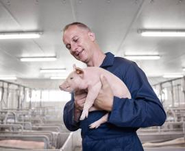 Recticel Insulation Powerline farmer and pig image