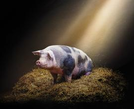 Lumix Insulation boards for better animal welfare